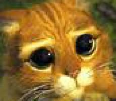 gangsta_cat